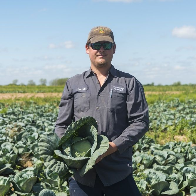Gundermann Acres Cabbage4